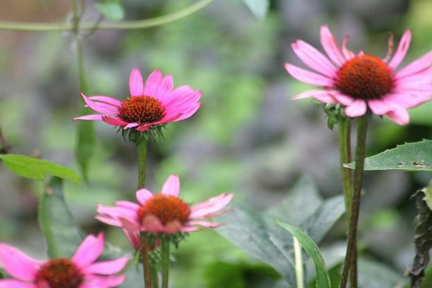 写真: 成長する庭