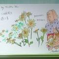 Photos: ベニズルさんの小菊は少女のような愛らしさ