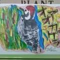 Photos: 夢41 野鳥カード