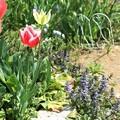 2019年春私の庭11