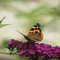 蝶の来る庭