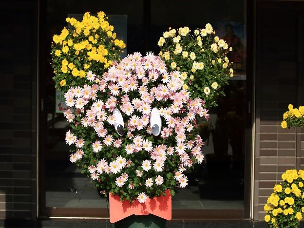 菊祭り 898A2479_R