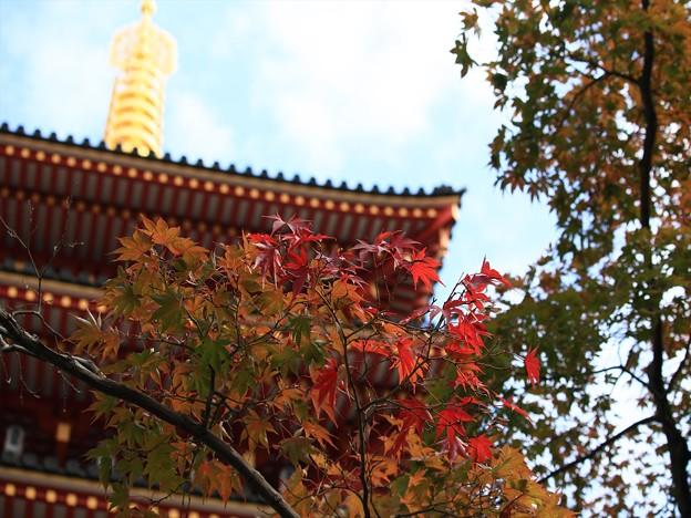 菊祭り 898A2508_R