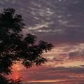 Photos: マジックアワーの太陽柱