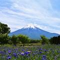 Photos: 山中湖 花の都公園