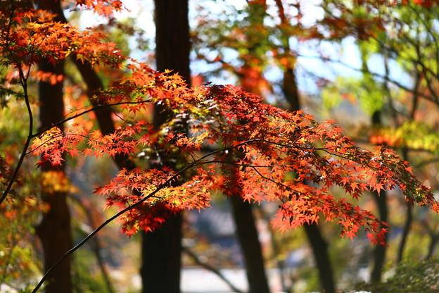 Photos: 鳴沢村 紅葉台にて
