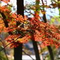 写真: 鳴沢村 紅葉台にて