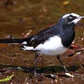 Photos: 松戸 21世紀の森と広場にて鳥撮り
