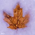 紅葉氷詰パック