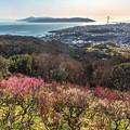 写真: 香る海峡