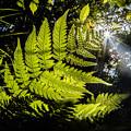 写真: 緑の陽射し