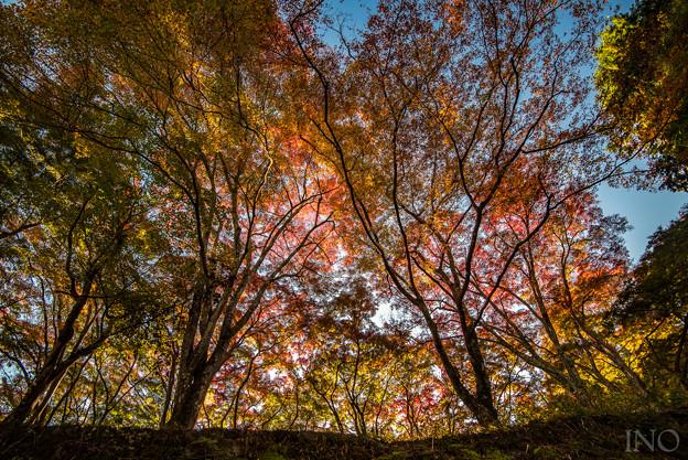 Photos: 朝の光を浴びて