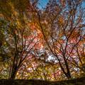 写真: 朝の光を浴びて