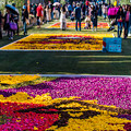 Photos: Infiorata 北野坂