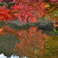 Photos: DSC_2507  薬師池の紅葉ー3