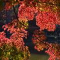 Photos: DSC_2494 薬師池の紅葉ー5