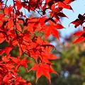 DSC_2479 薬師池の紅葉ー8