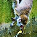 DSC_4047 (2)小猿のゴミ拾い