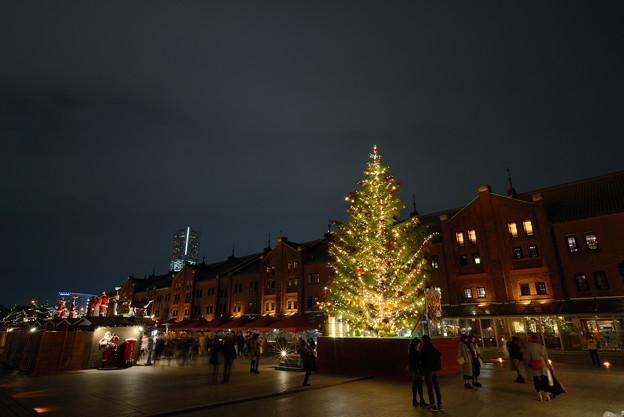 赤レンガとクリスマスツリー
