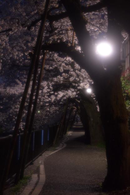 地元の桜その2
