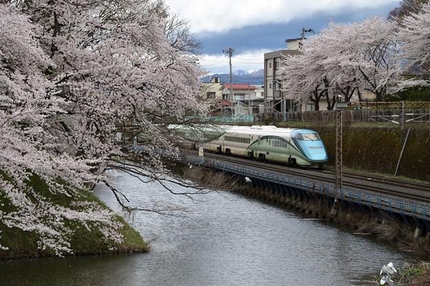桜ととれいゆつばさ