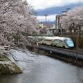 写真: 桜ととれいゆつばさ