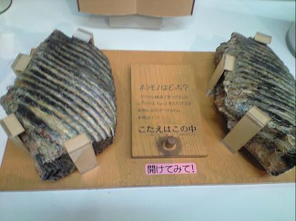 化石orレプリカ