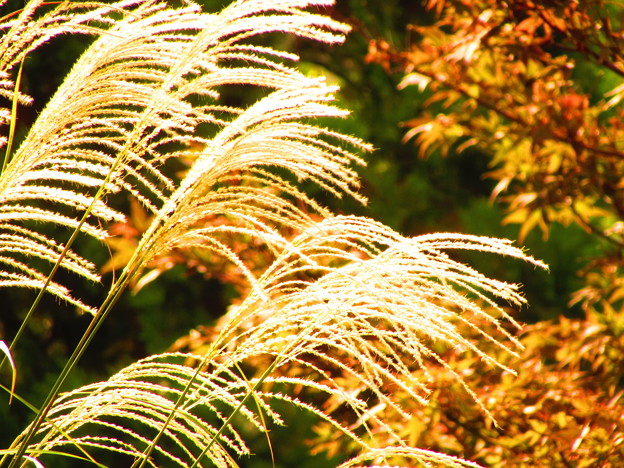 陽射し、秋風、柔らかく