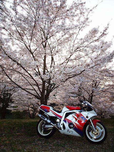 桜ツーリング