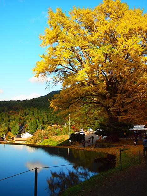 Photos: 金言寺