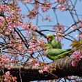 Photos: W花ぐるま♪