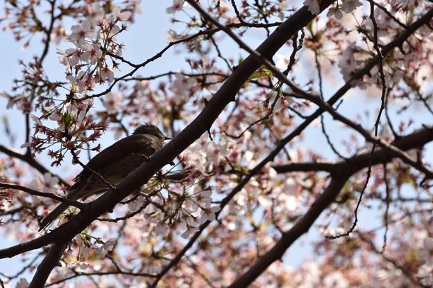 春の終わり