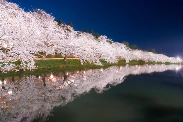 桜並木~弘前城西濠@弘前公園