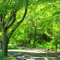 Photos: 深緑