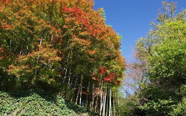 洛西竹林公園08