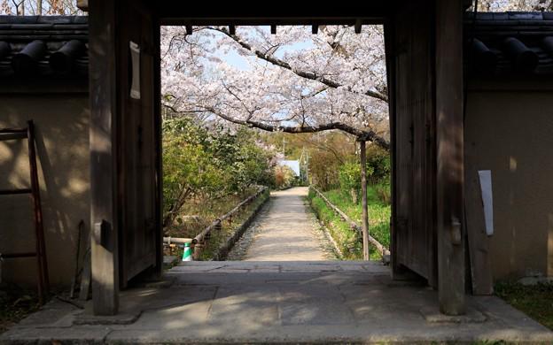 浄瑠璃寺39