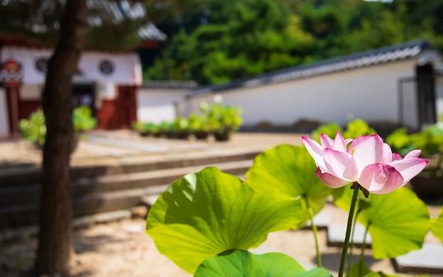 萬福寺10