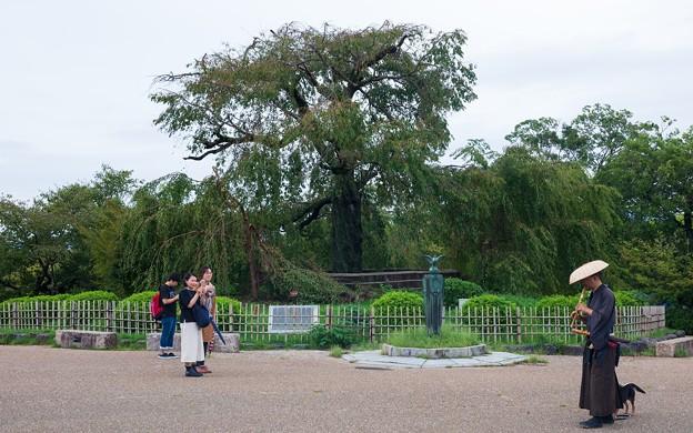 円山公園05