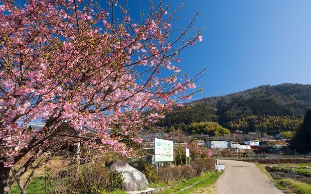 椿坂公園05