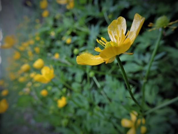 F015_名も知らぬ野草花
