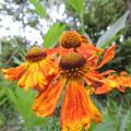 バトミントンのシャトルに似た花