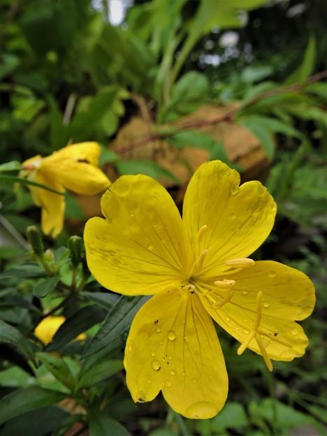 黄色い花ma