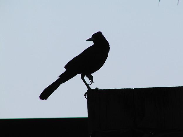 マイアミの野鳥 #3