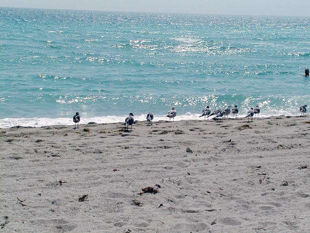 マイアミの野鳥 #5