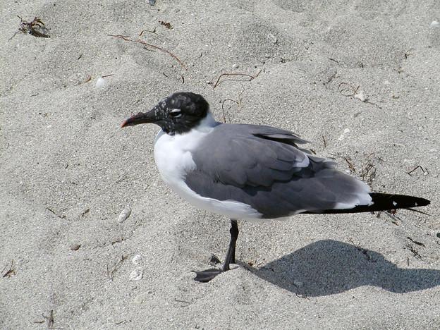 マイアミの野鳥 #6