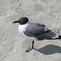 Photos: マイアミの野鳥 #6