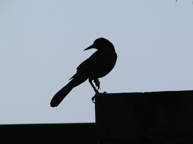 マイアミの野鳥 #8