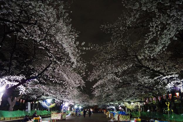 夜桜 #1