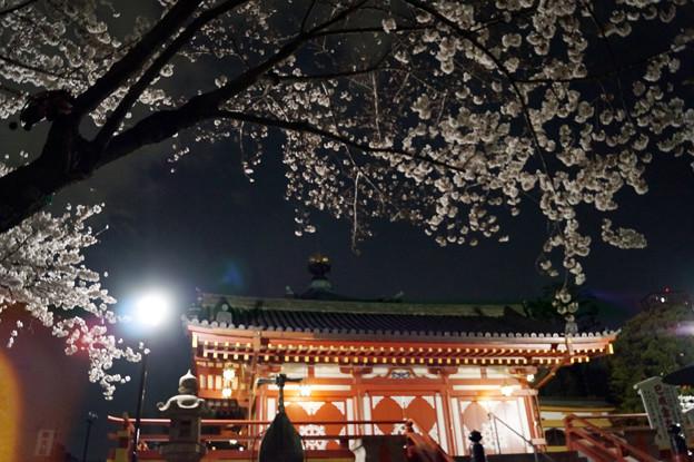夜桜 #7