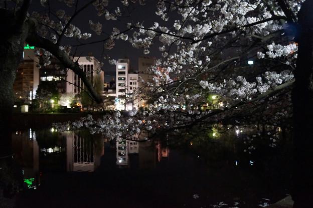 夜桜 #9